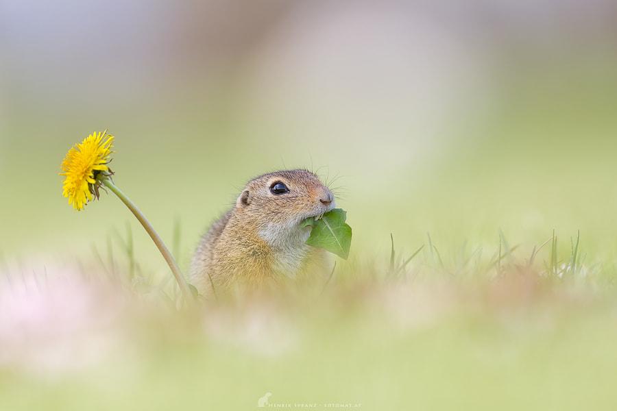 ~ Salad Lover ~