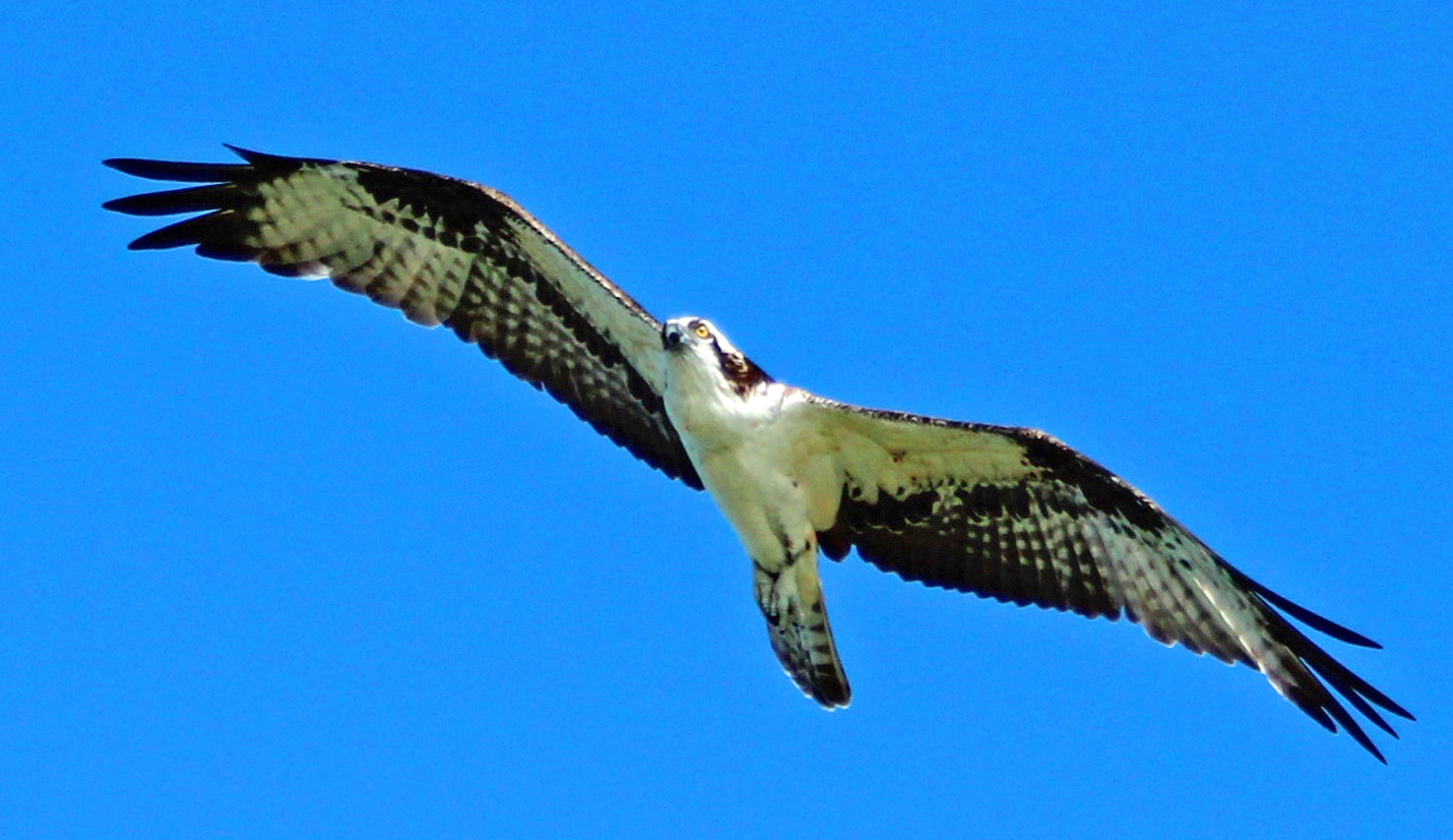 Photograph OSPREY BY THE LAKE by robin ulery on 500px