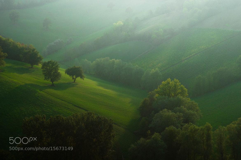 Photograph la nebbia si è diradata un pò, ed è uscito il sole.. by Michele Fornaciari on 500px