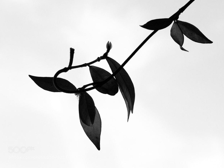 Photograph black & white by Kounoupis Anastasios  on 500px