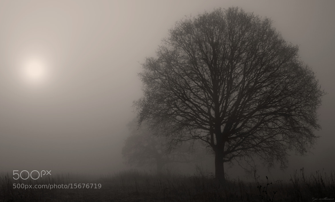 Photograph Sepia by jo williams on 500px