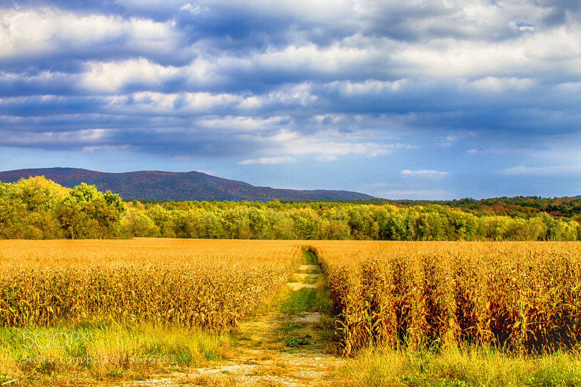 Photograph Field of Dreams. . . by Sonny Hamauchi on 500px