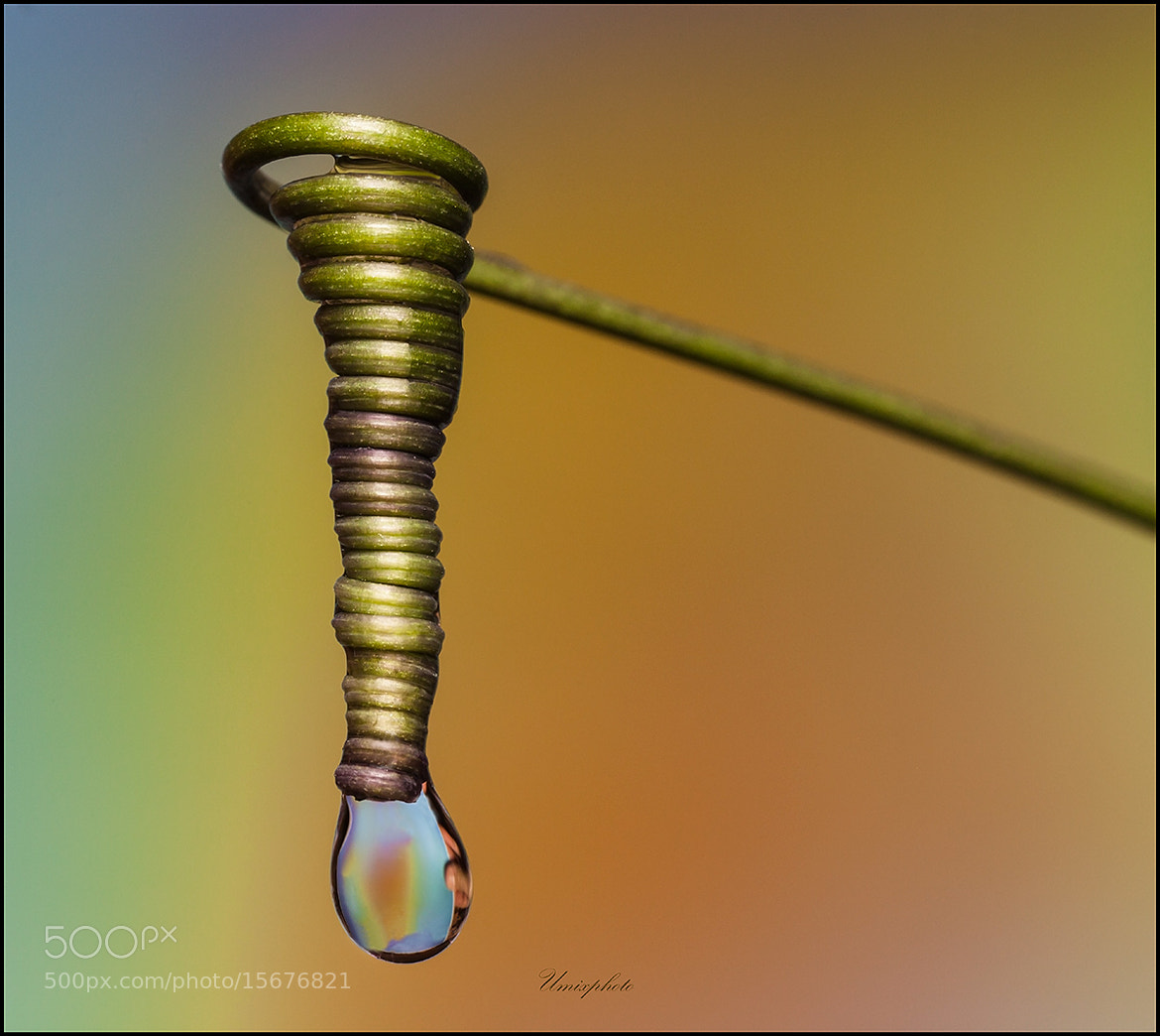Photograph Drop III. by Jaro Miščevič on 500px