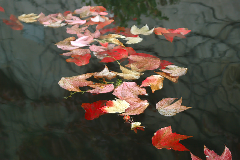 Photograph  LAST LEAVES ON THE WATER... by Magda Indigo on 500px