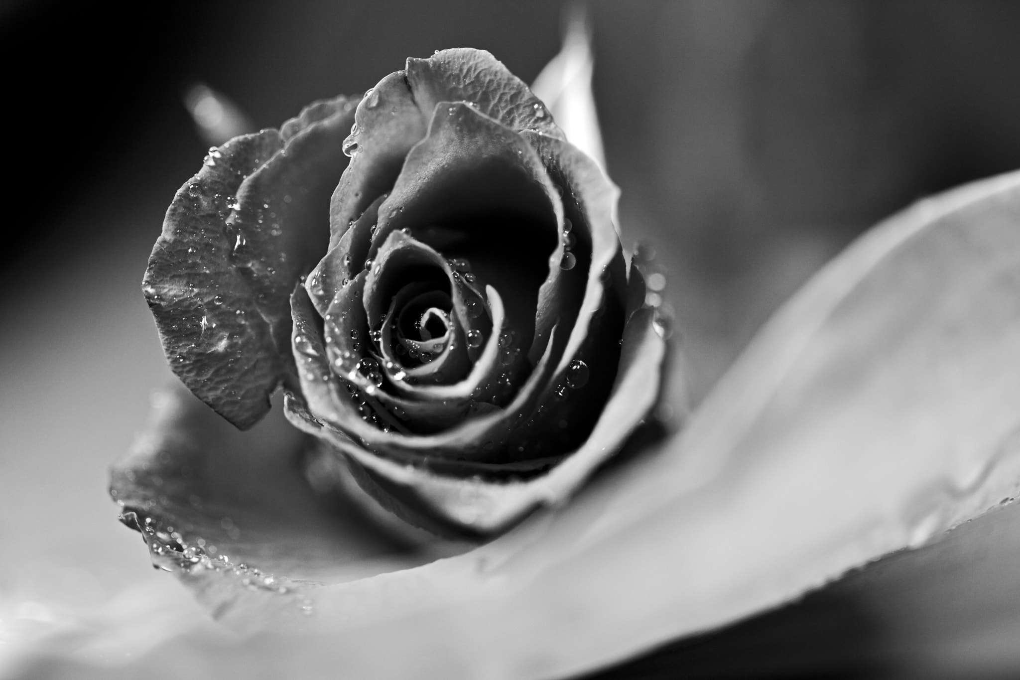 Photograph In black & white by DEW SP on 500px