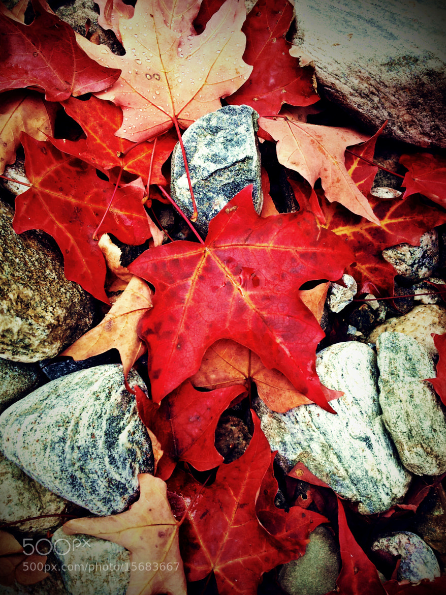 Photograph Red Leaves on the Rocks by Susan Drysdale on 500px
