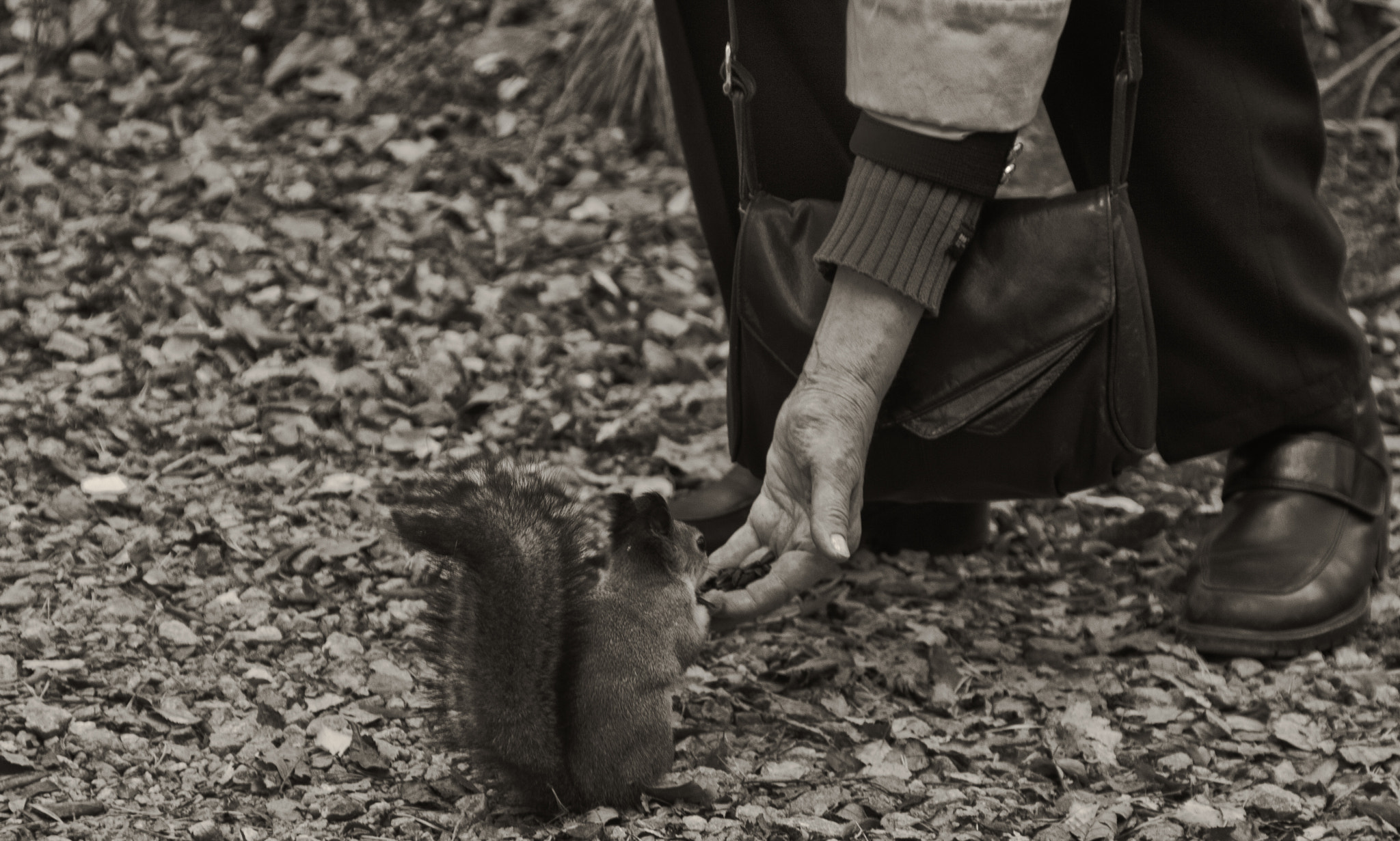Photograph Squirrel by Jari Knuutila on 500px
