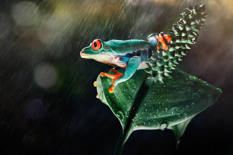 amazon frog by Ivan Lee on 500px.com