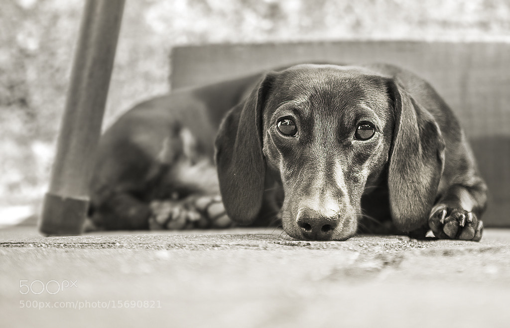 Photograph Peppa by Pedro Cano on 500px