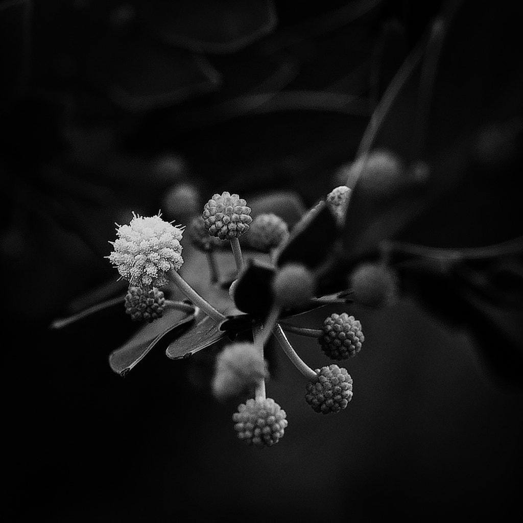 Photograph Dark Flower by Harry F on 500px