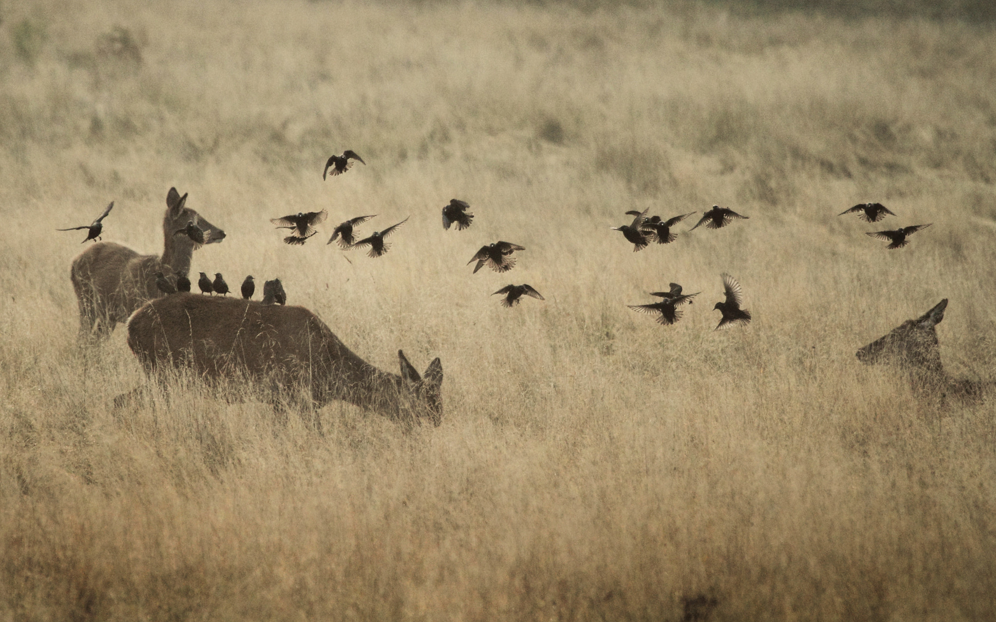 Photograph flock on does by Lee Crawley  on 500px