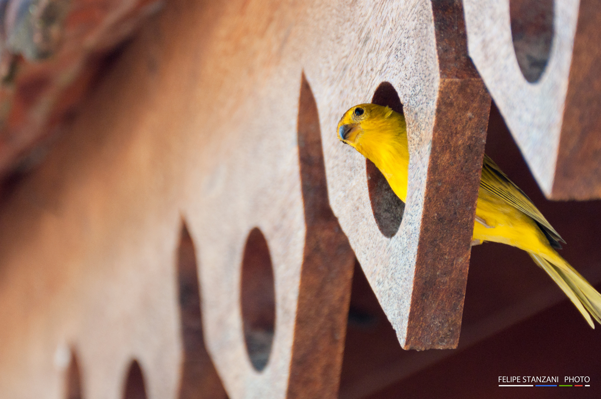 Photograph Bird in The Hole by Felipe Stanzani on 500px