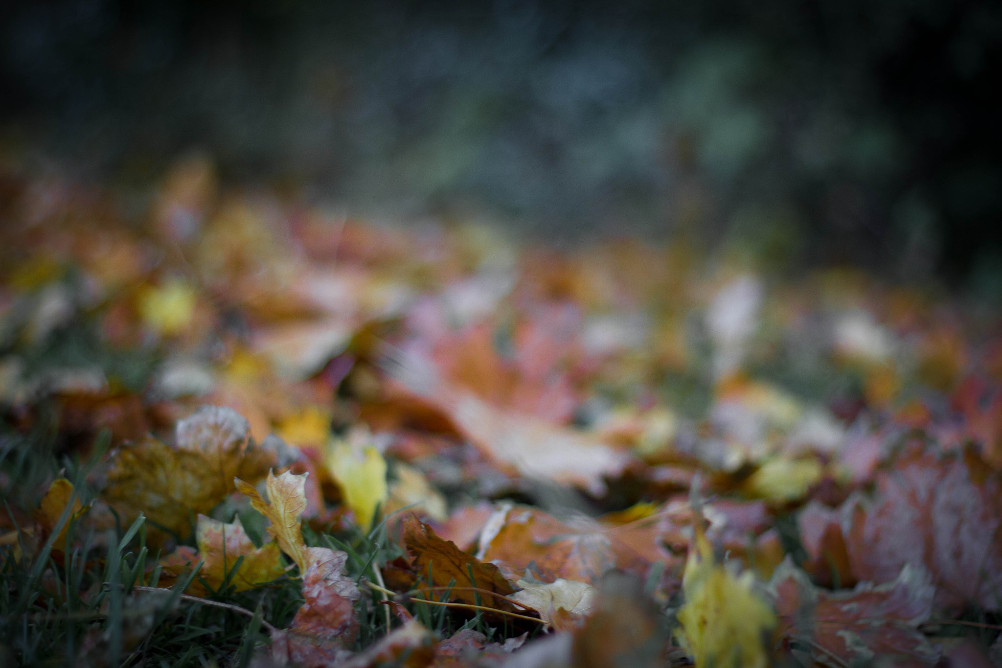 Photograph Autumn. by Jamie Shardlow on 500px