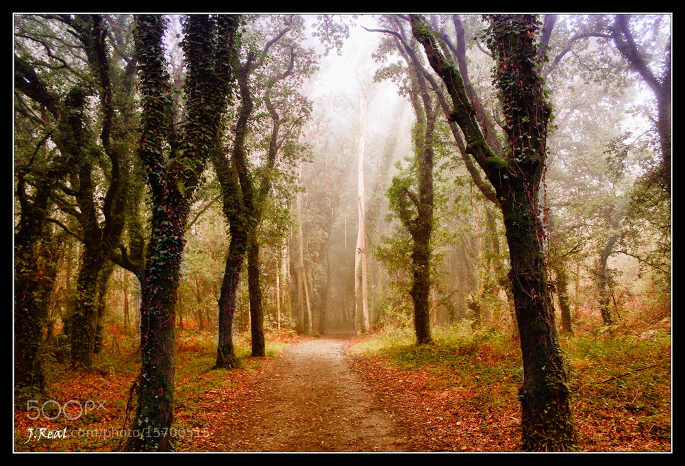 Photograph Bosque by Juan Real on 500px