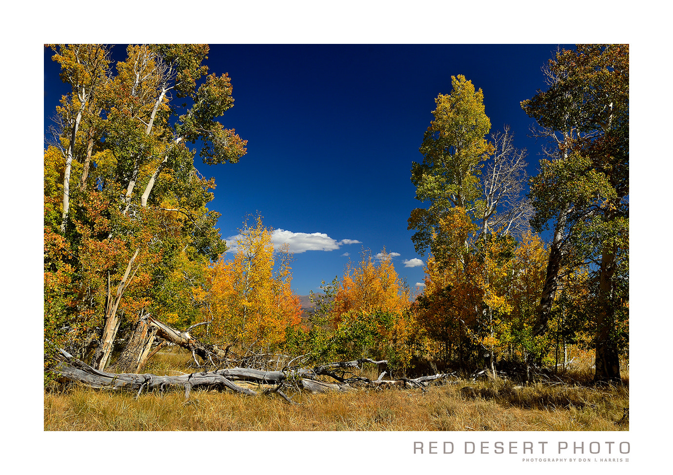 Photograph East Side Sierra Nevada  Fall 2012 by Red Desert Photo on 500px