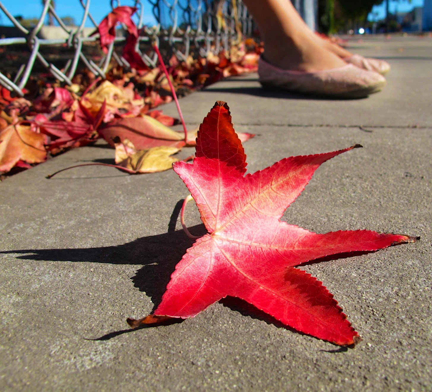 Photograph Fall Leaves and Pretty Pink Shoes by Leah Stohs on 500px
