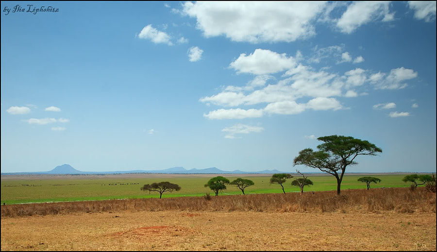 Tarangire landscapes №2