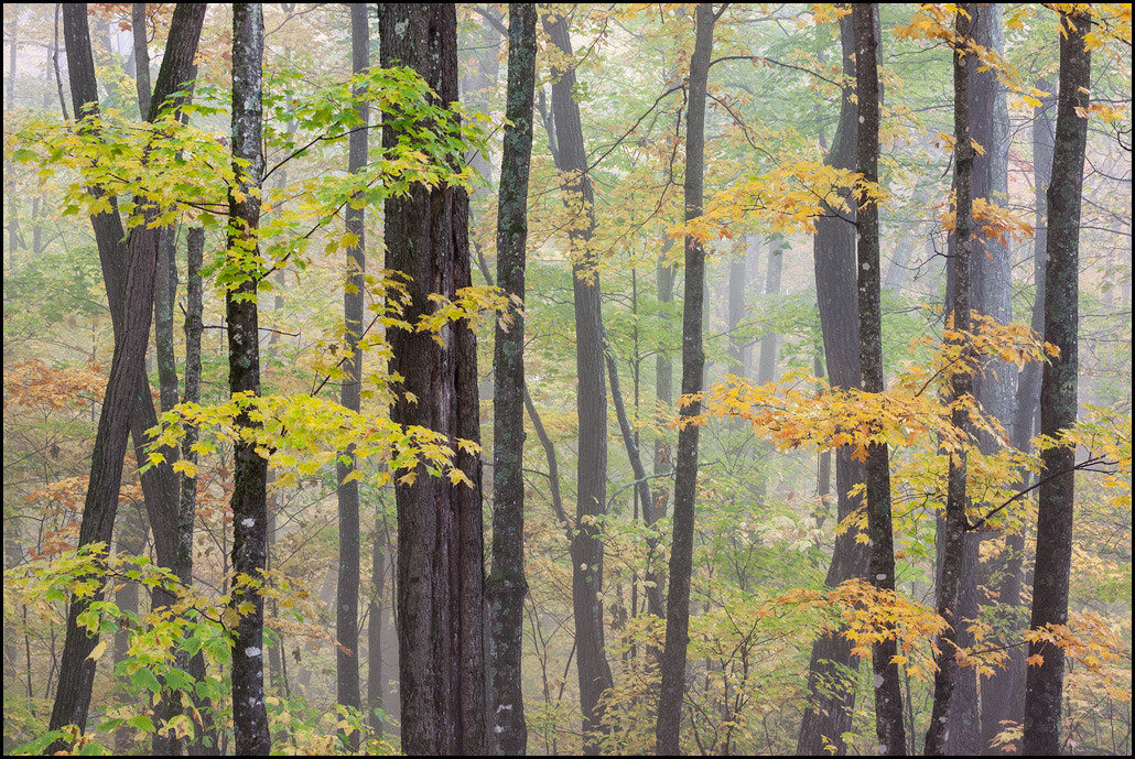 Photograph Foggy Forest by Chris Kayler on 500px