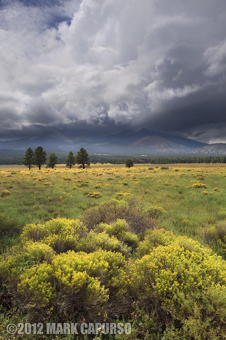 Photograph Rabbitbrush Under Clearing Skies by Mark Capurso on 500px