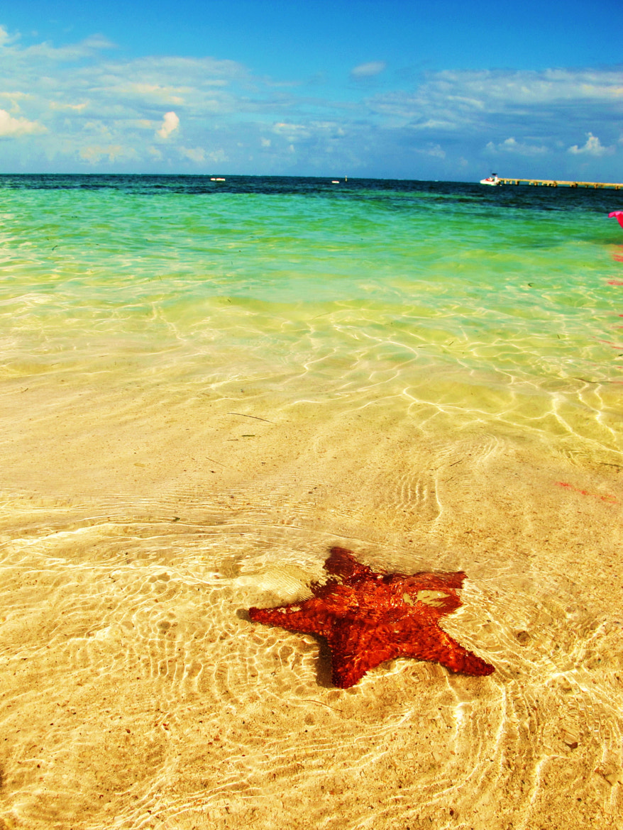 Photograph The star in the ocean by Kristy Yang on 500px