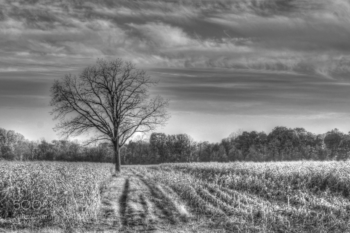 Photograph A Tree, Lonelier Than Me by S Christian Benz on 500px