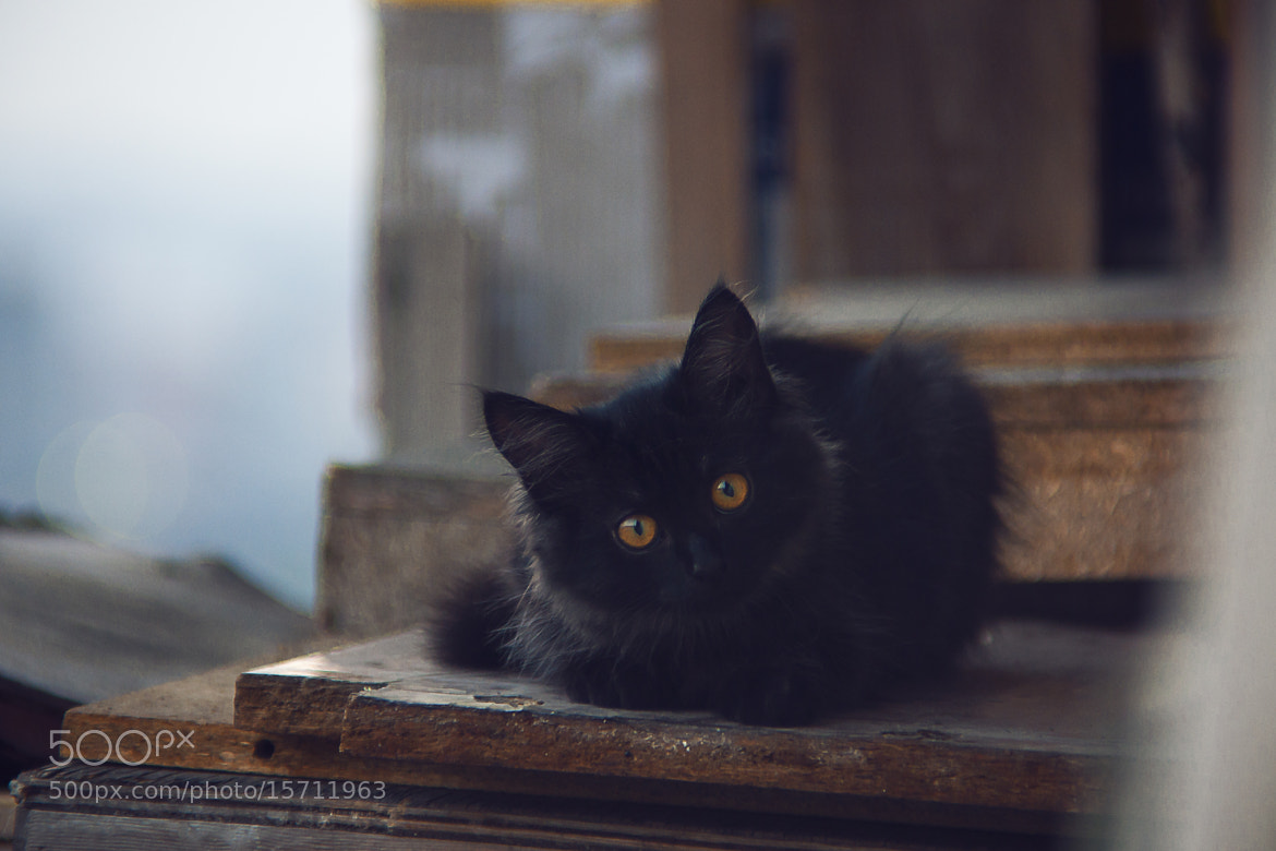Photograph black cat by Evgeny Shabalin on 500px