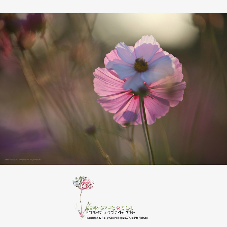 Photograph cosmos by KIM DONGYOUNG on 500px