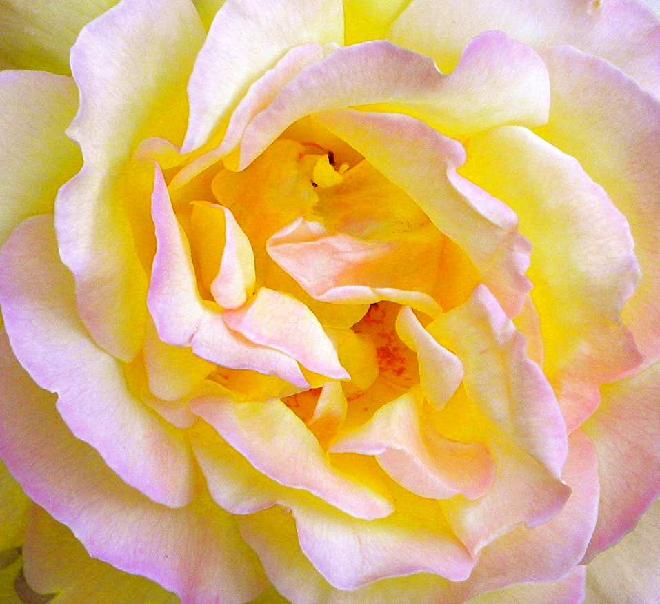 Photograph Soft and Gentle by Ann Weis on 500px