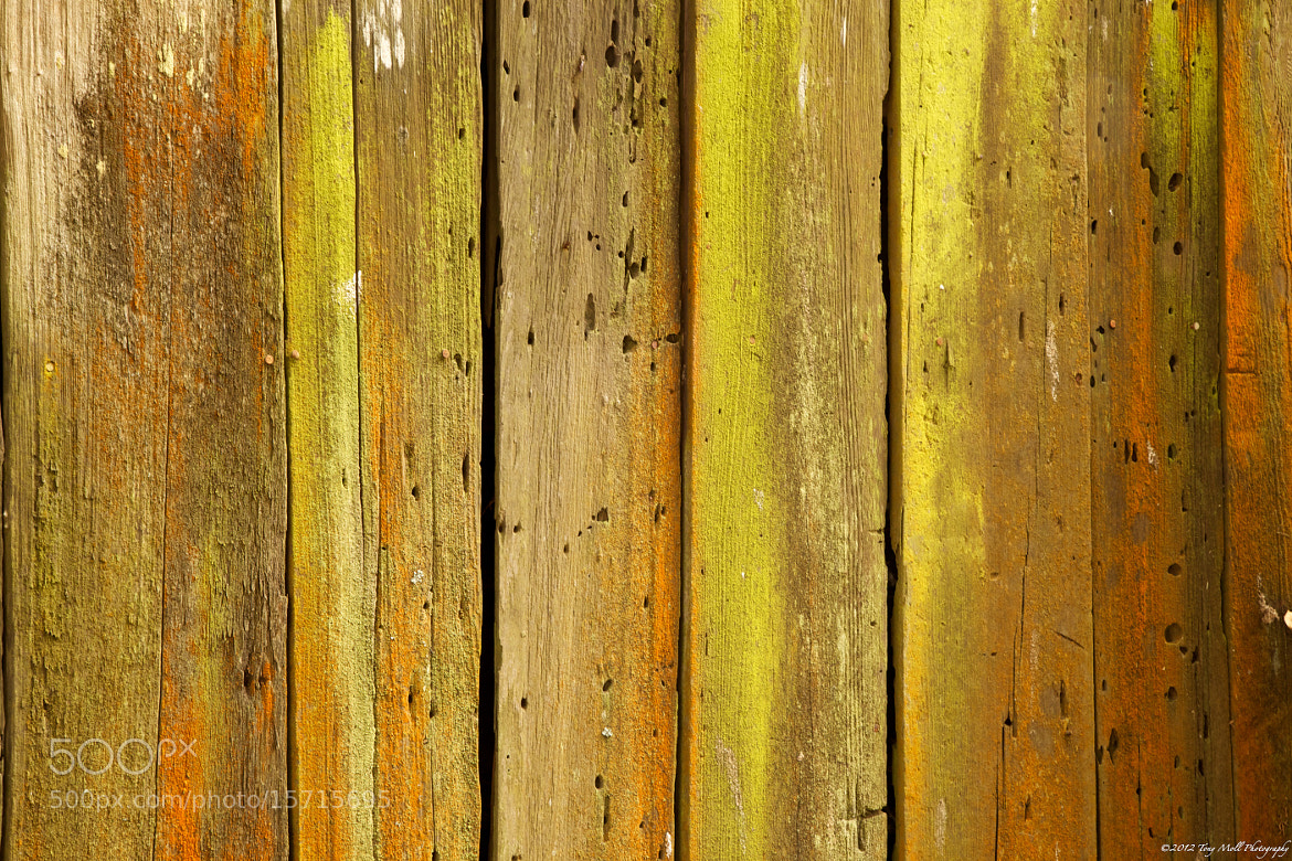 Photograph Old Wood by Tony Moll on 500px