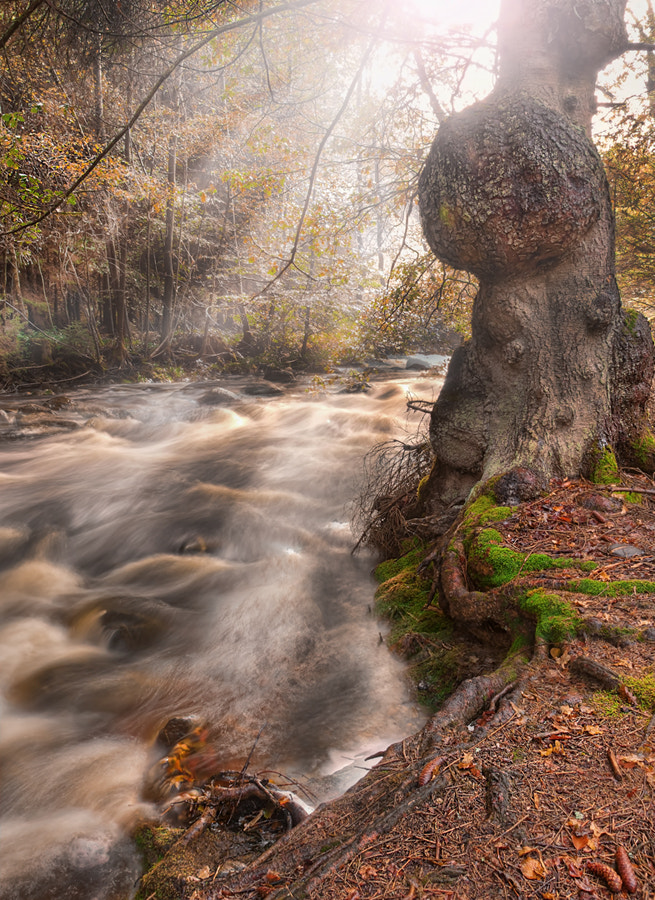 Photograph light in the ardennen by Patrick Strik on 500px