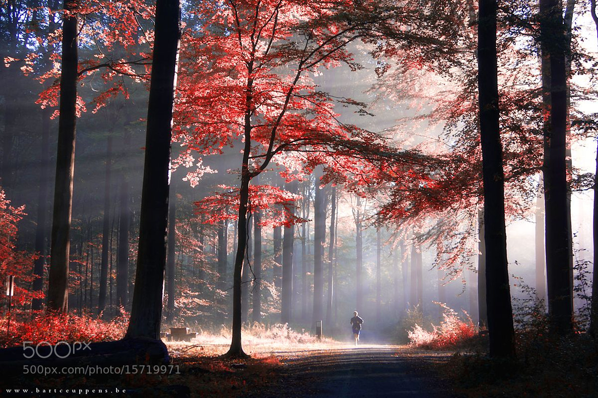 Photograph Autumn is just around the corner 6 by Bart Ceuppens on 500px