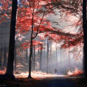 Autumn is just around the corner 6 by Bart Ceuppens (bartceuppens)) on 500px.com