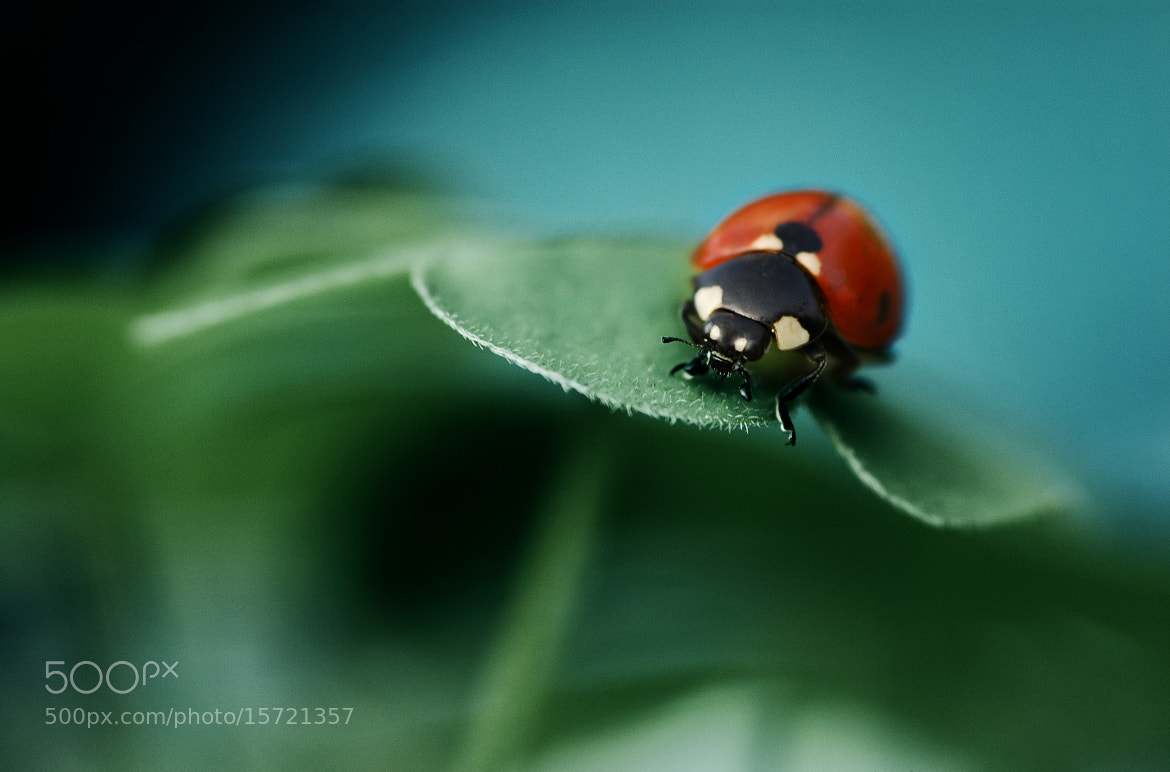 Photograph On The Edge by Dax  on 500px
