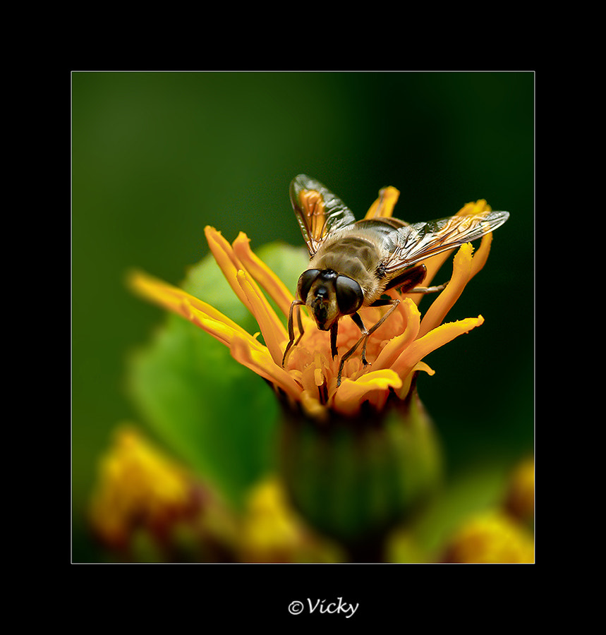 Photograph on a yellow flower by Vicky Dens on 500px