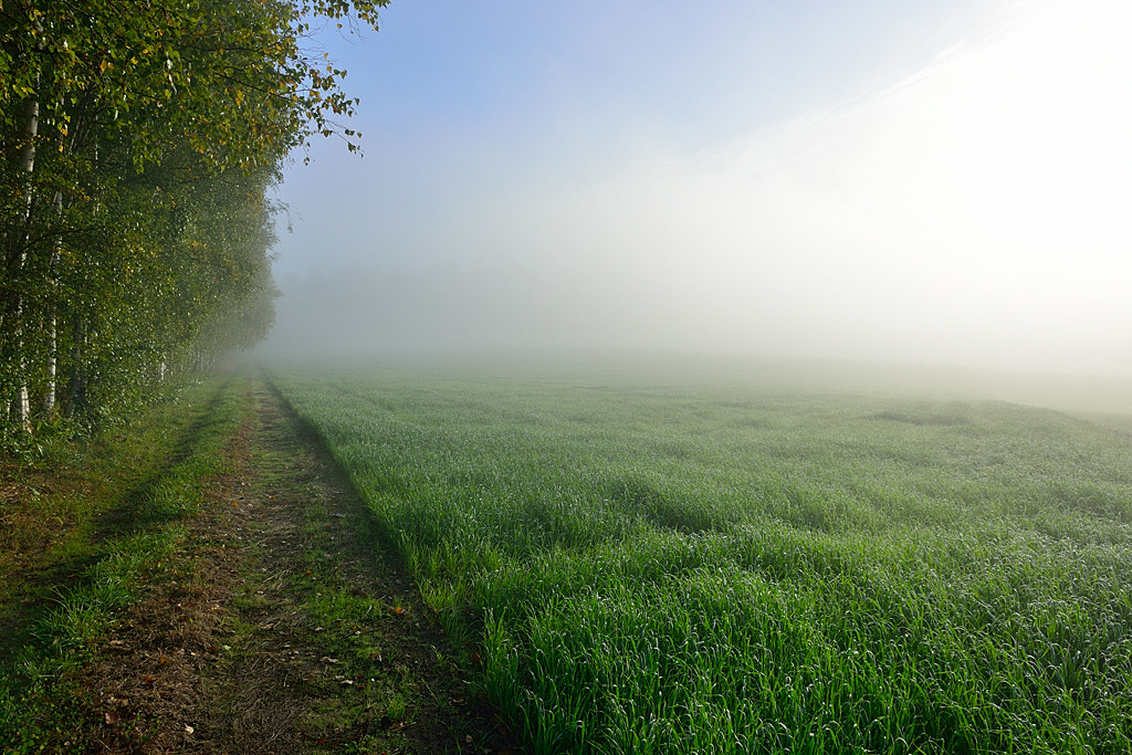 Photograph Morning Mist & Wheat's Field by Kent Shiraishi on 500px
