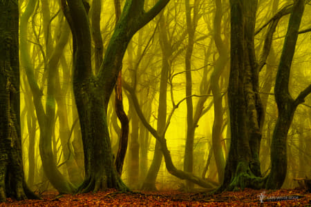 Return to the Magical forest II by Klassy Goldberg on 500px