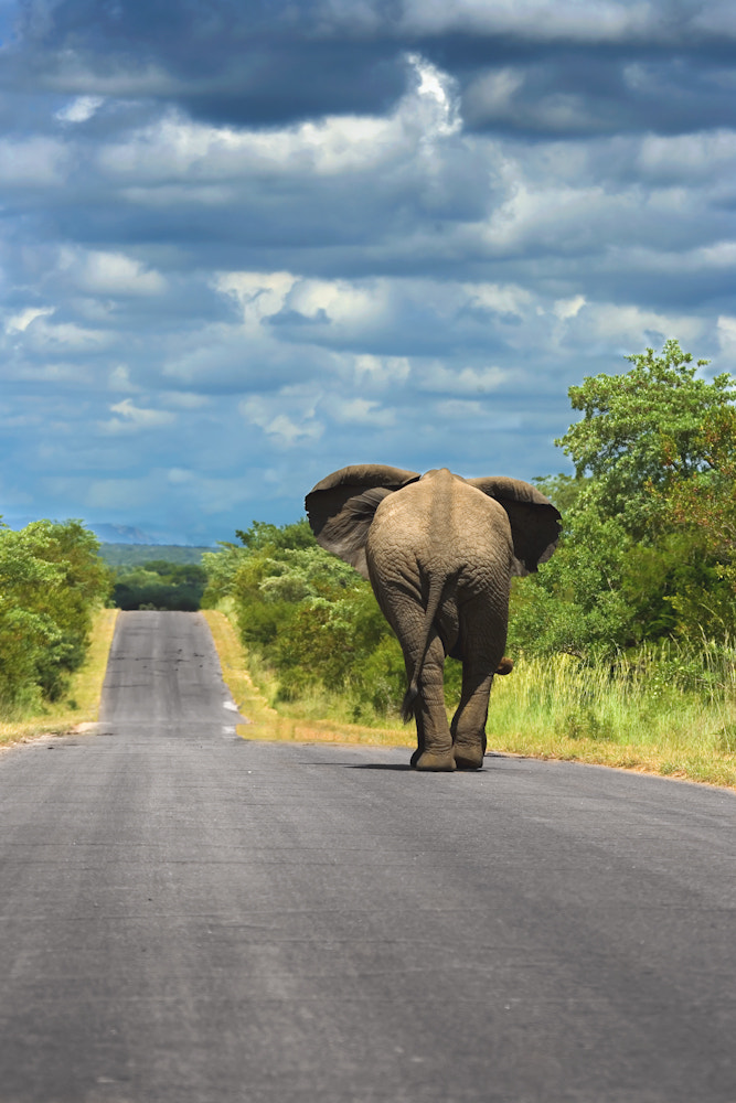 Photograph Elephant Highway by Mario Moreno on 500px
