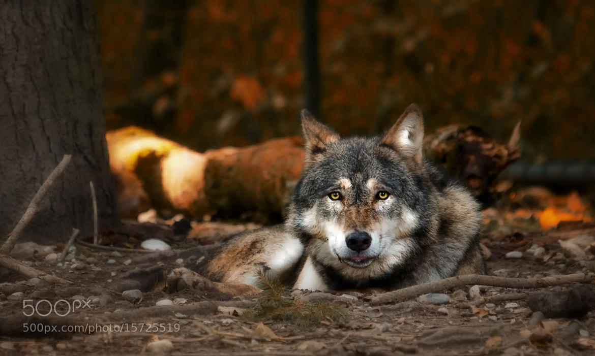 Photograph the eyes meet by Sonja Probst on 500px