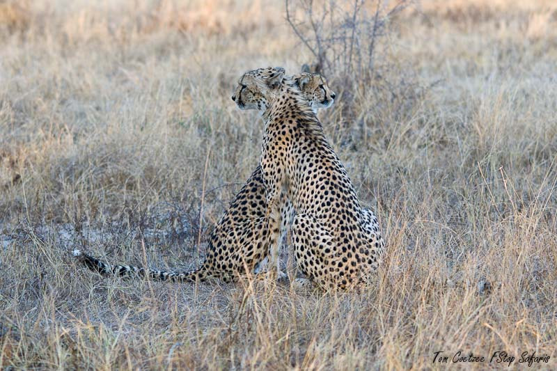 Photograph You cover my back? by Tom Coetzee on 500px
