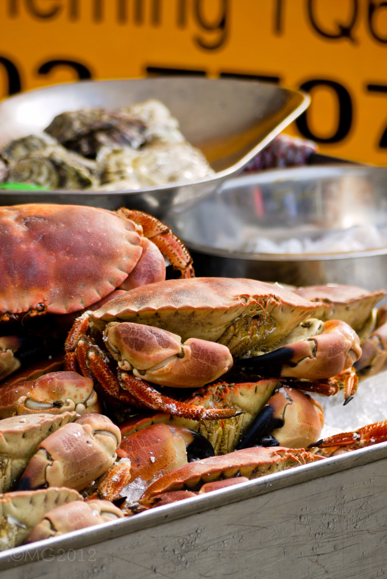 Photograph Crab for Sale by Matt Goodman on 500px