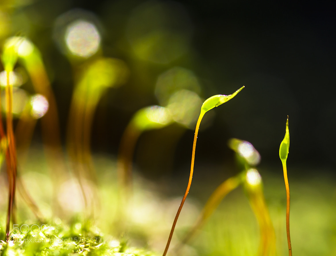Photograph Moss. by OKAWA โอ๋กะหว้า. somchai on 500px