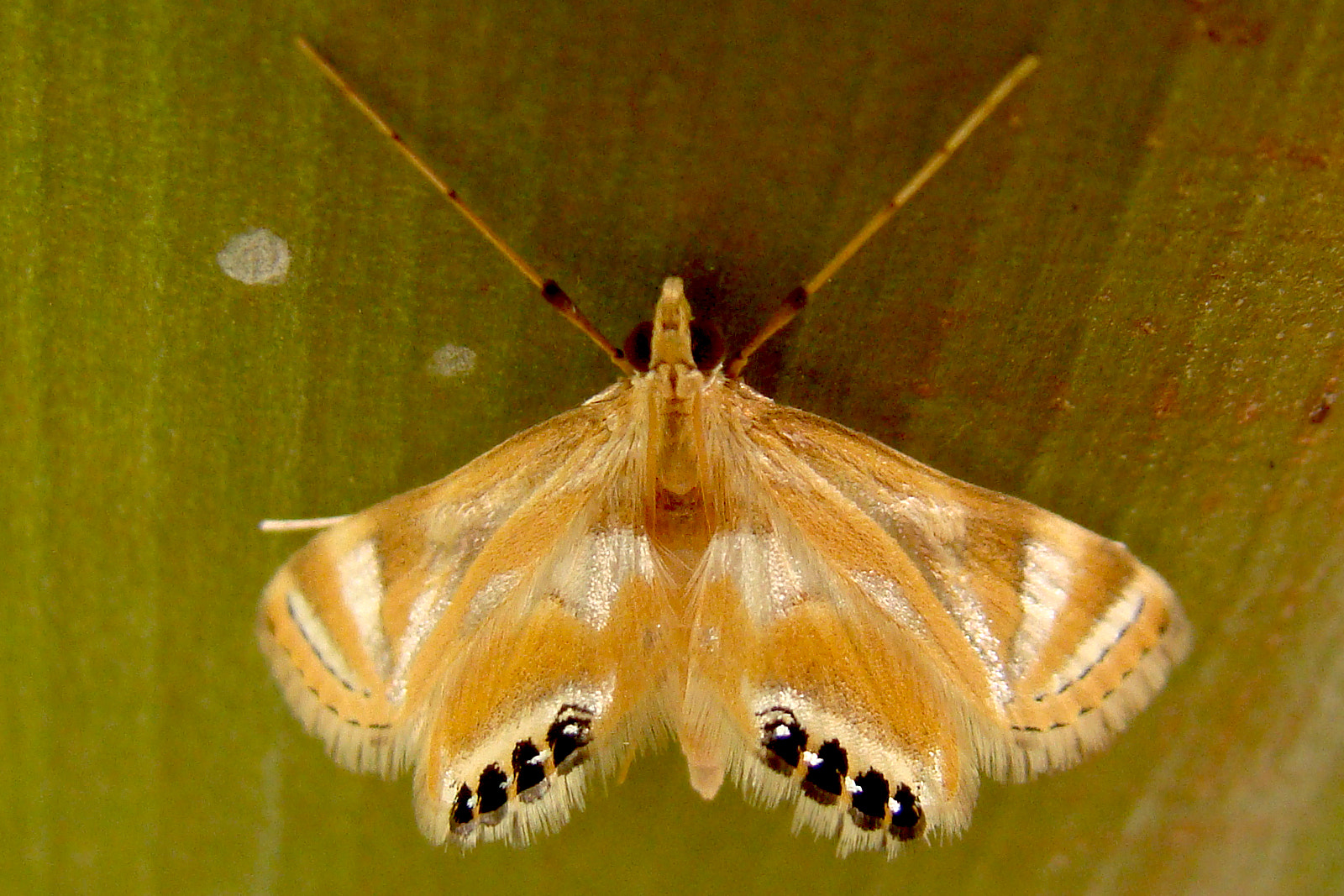 Photograph Silky Moth by Anand Lepcha on 500px