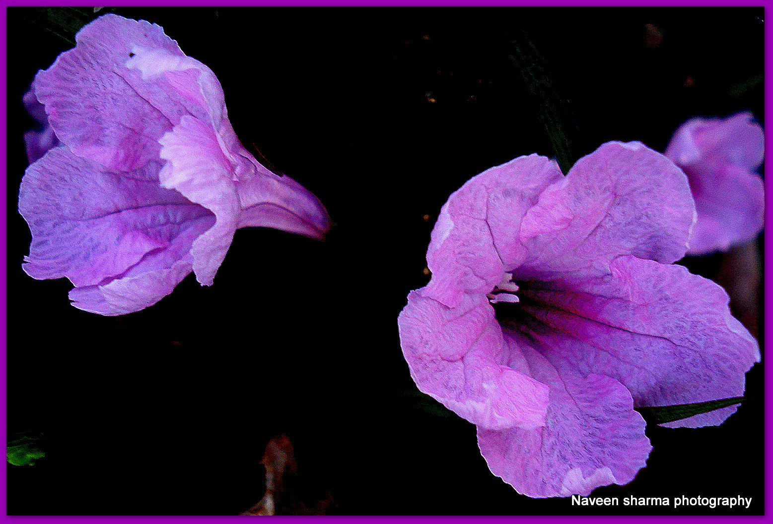 Photograph VIOLET CHARISMA by naveen sharma on 500px