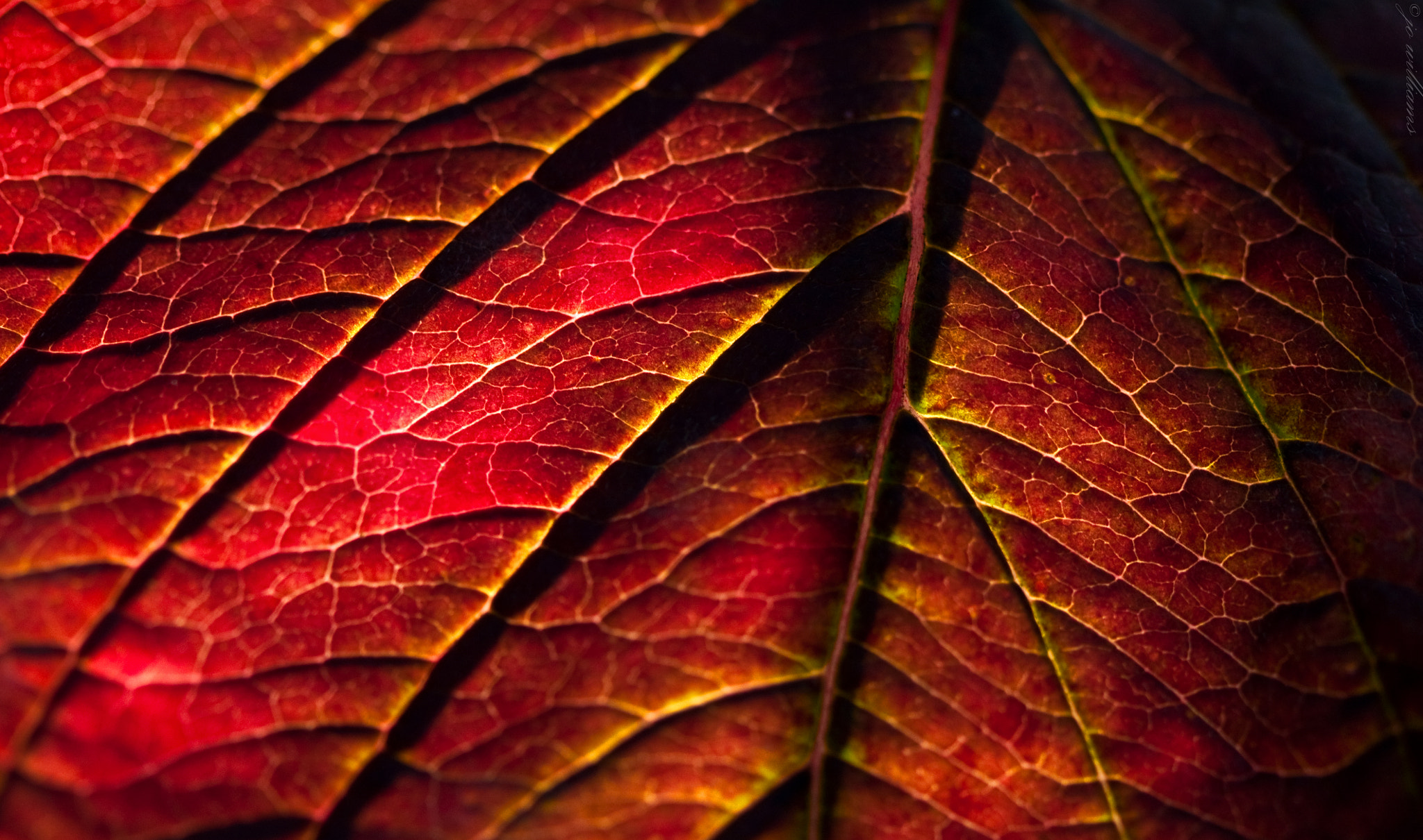 Photograph Lost Chlorophyll by jo williams on 500px
