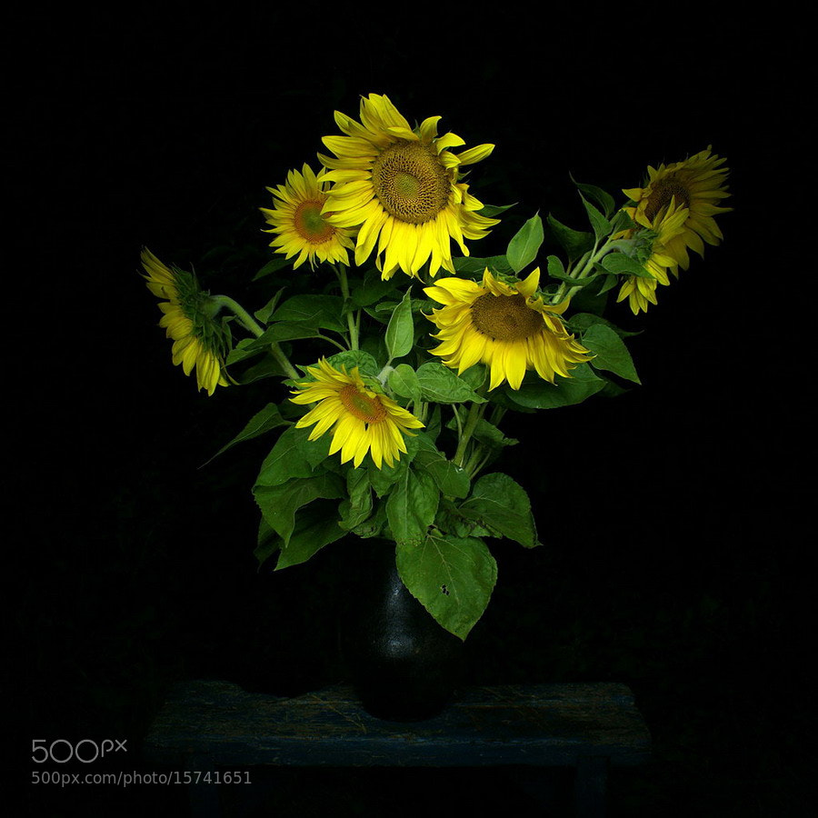 Photograph Sunflowers by Volodymyr Nikitenko on 500px