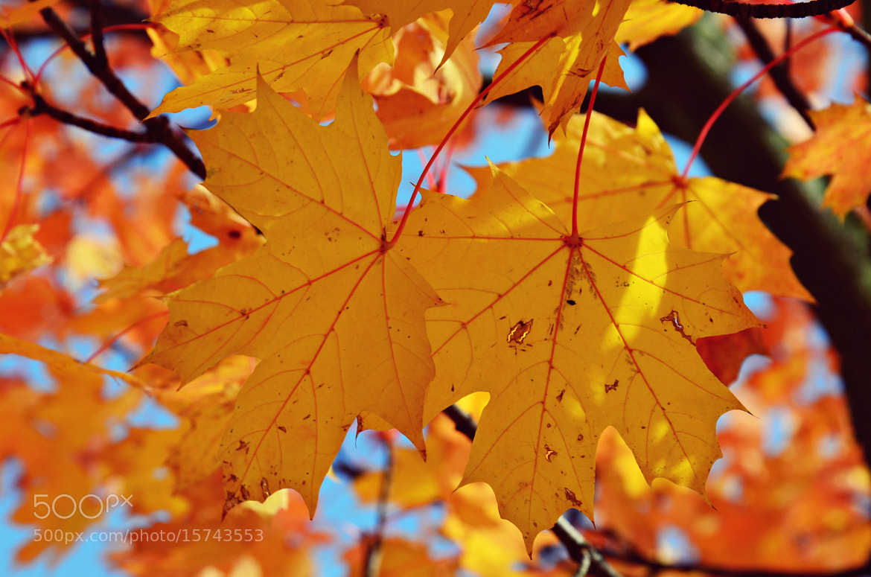 Photograph FINALLY autumn ♥♥  by Julia Kaufmann on 500px