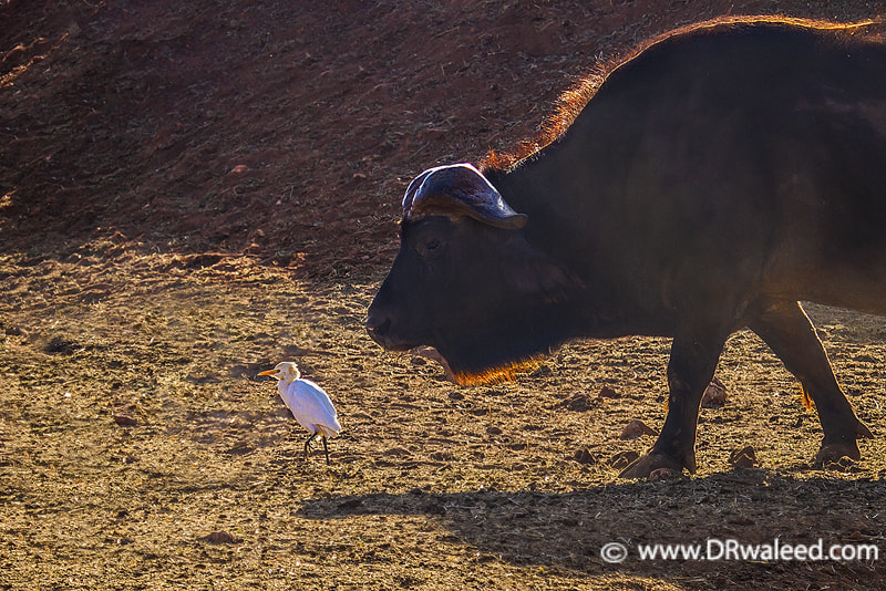 Photograph THE LITTLE LEADER by Waleed AlShumrani on 500px