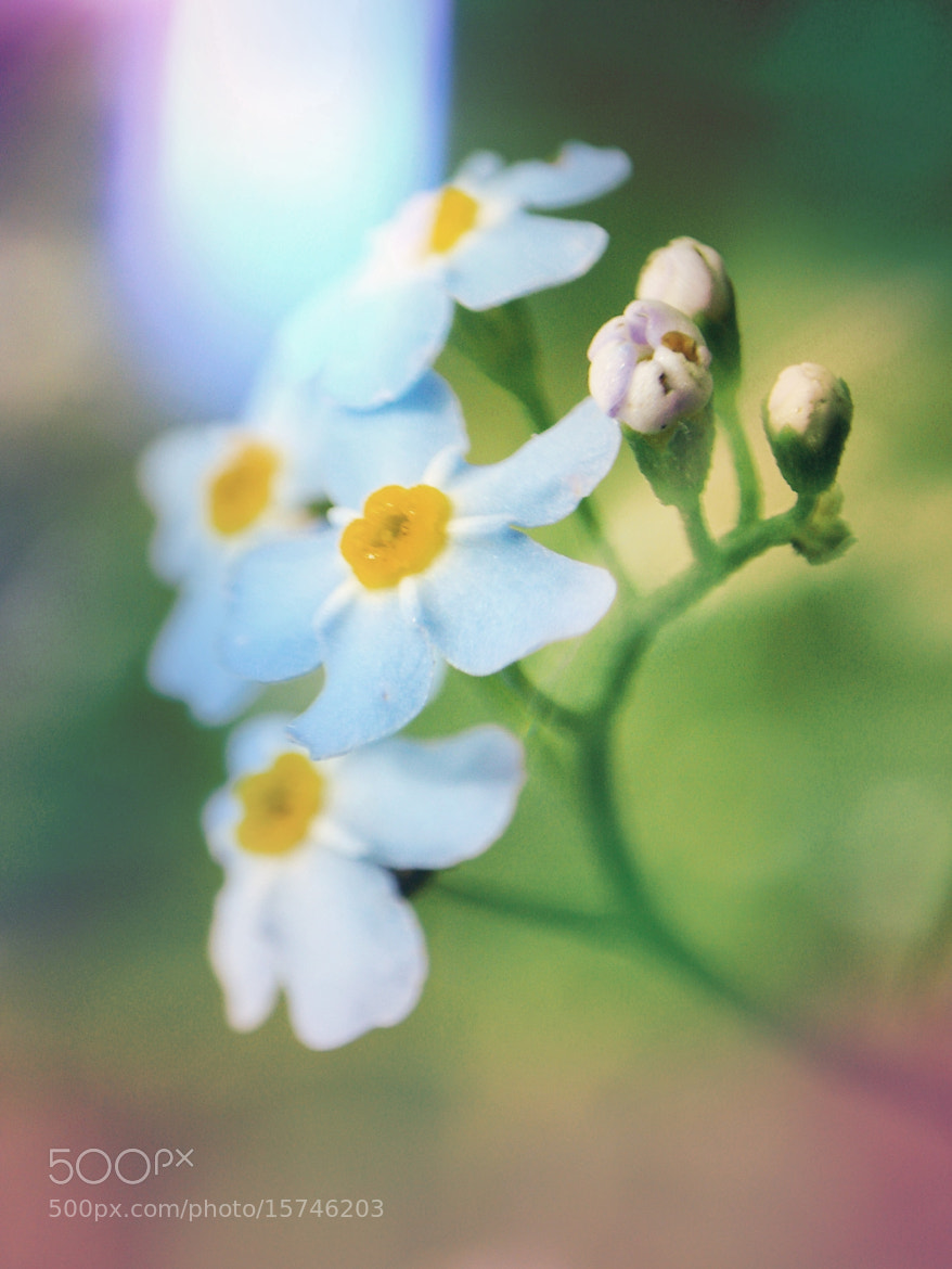 Photograph story of three flowers by Vitaliy Greh on 500px