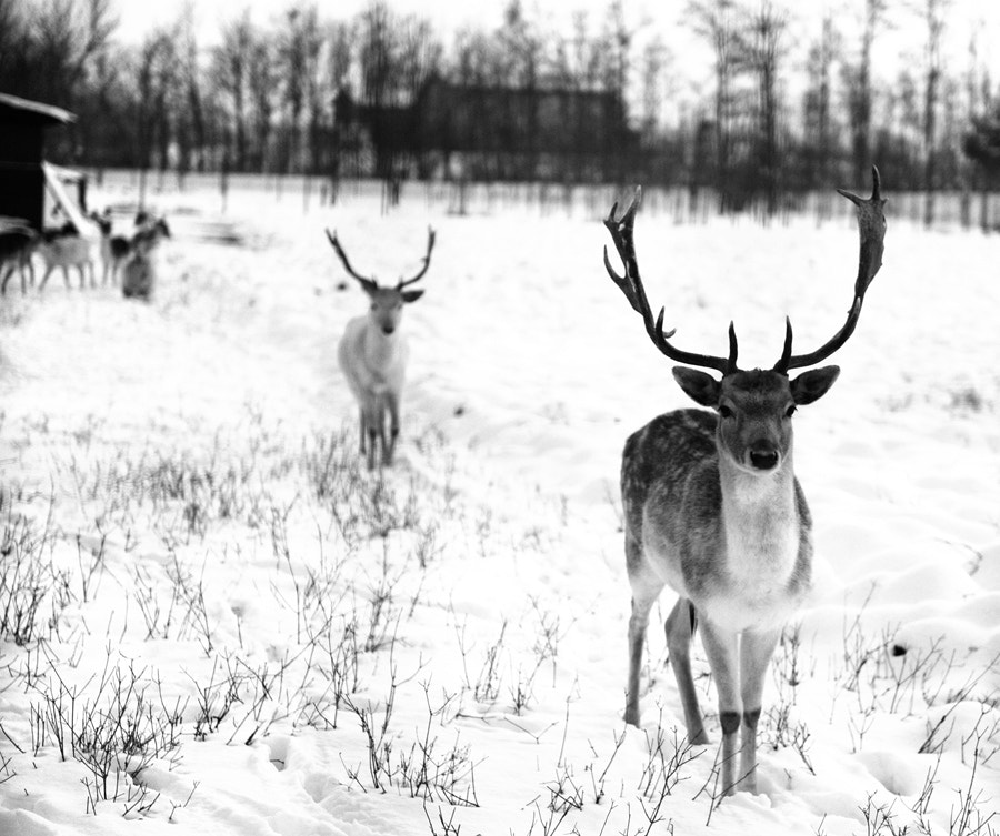 Photograph Into the wild by Federica Provini Fotografie on 500px