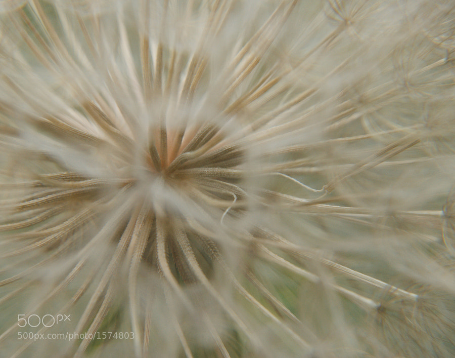 Macro abstract of Salsify